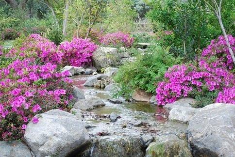 Azaleas Pond1