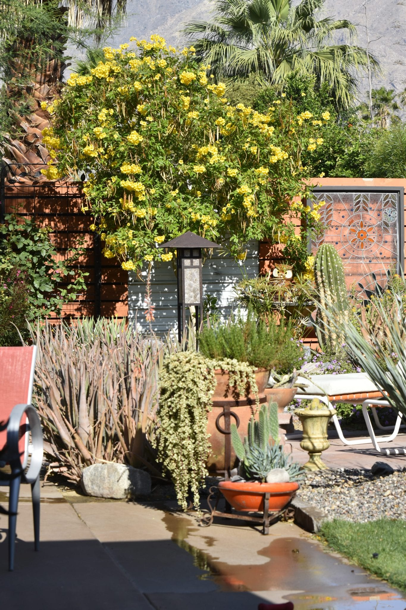 Desert Garden I
